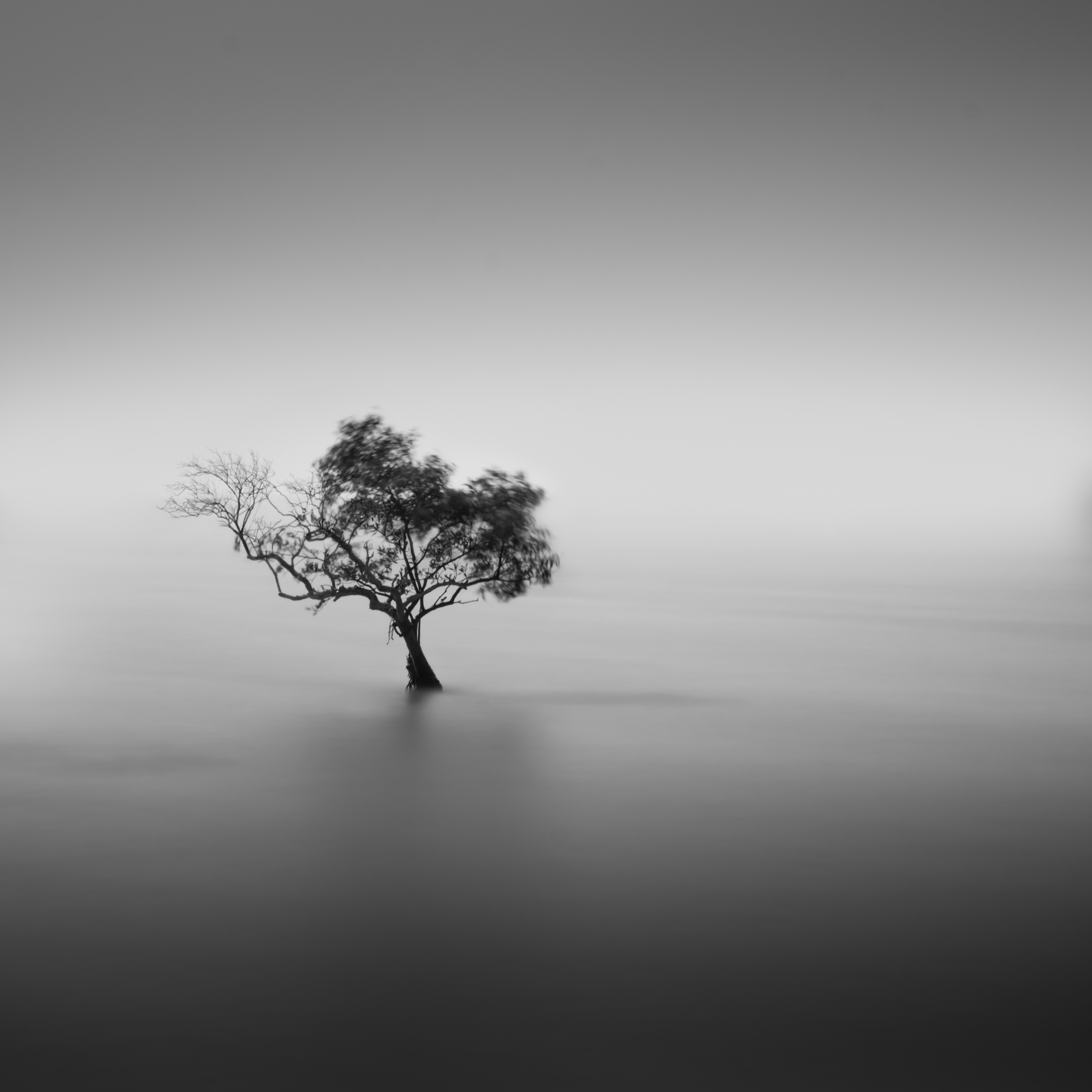 Minimalist Black and White Tree Alone iPad Wallpaper