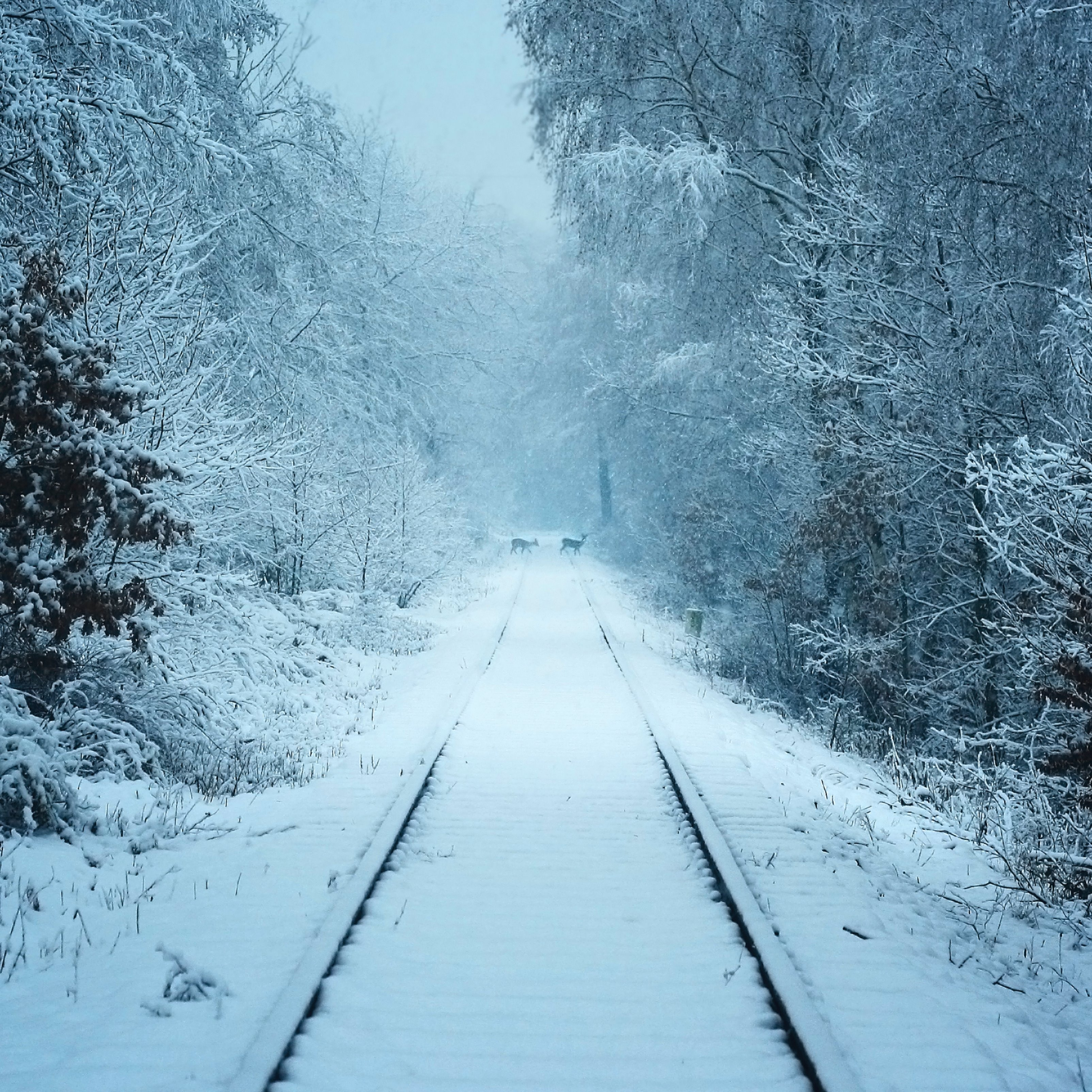 Winter Railroad Track Snow Forest Weather iPad Wallpaper