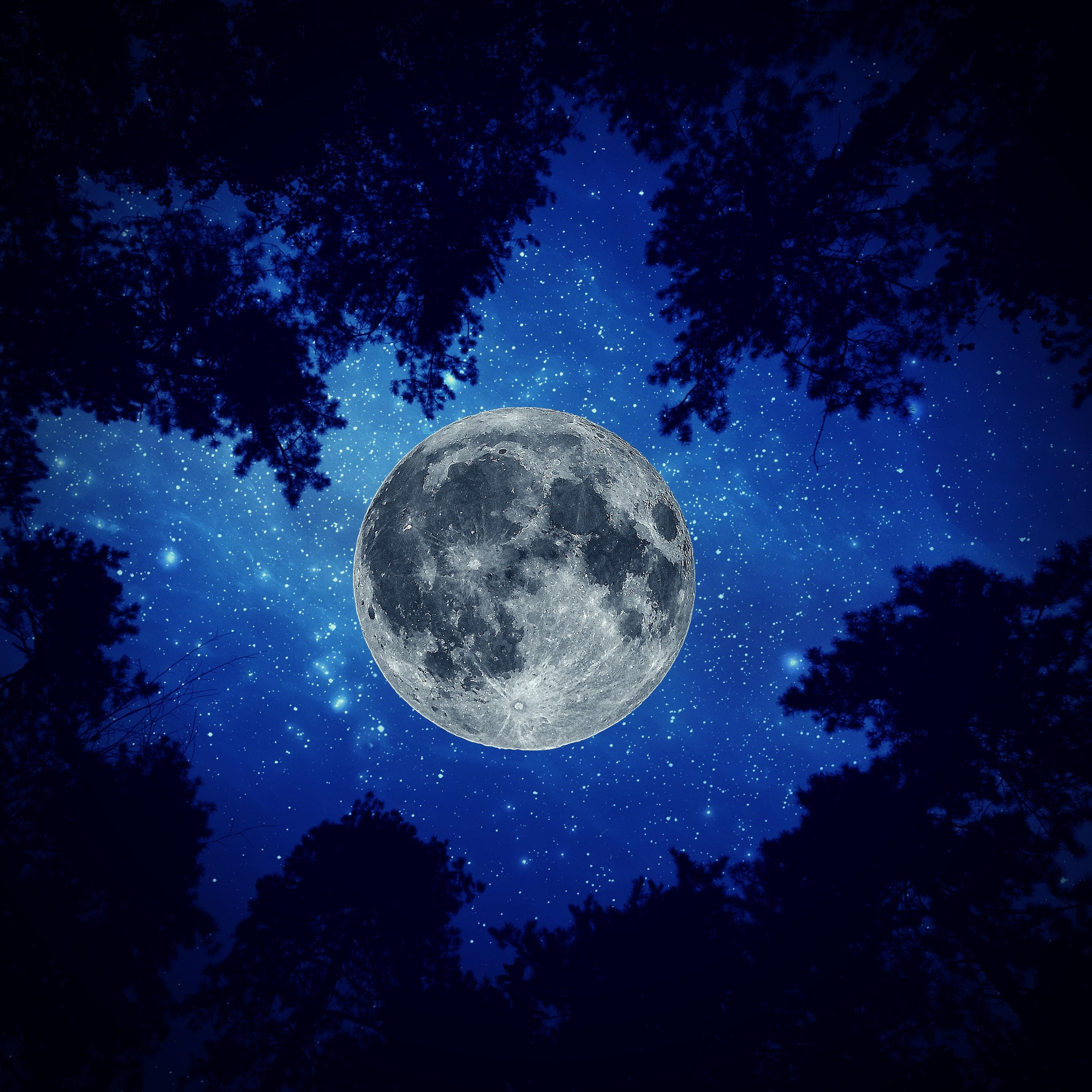 Night Moon Sky Trees iPad Wallpaper