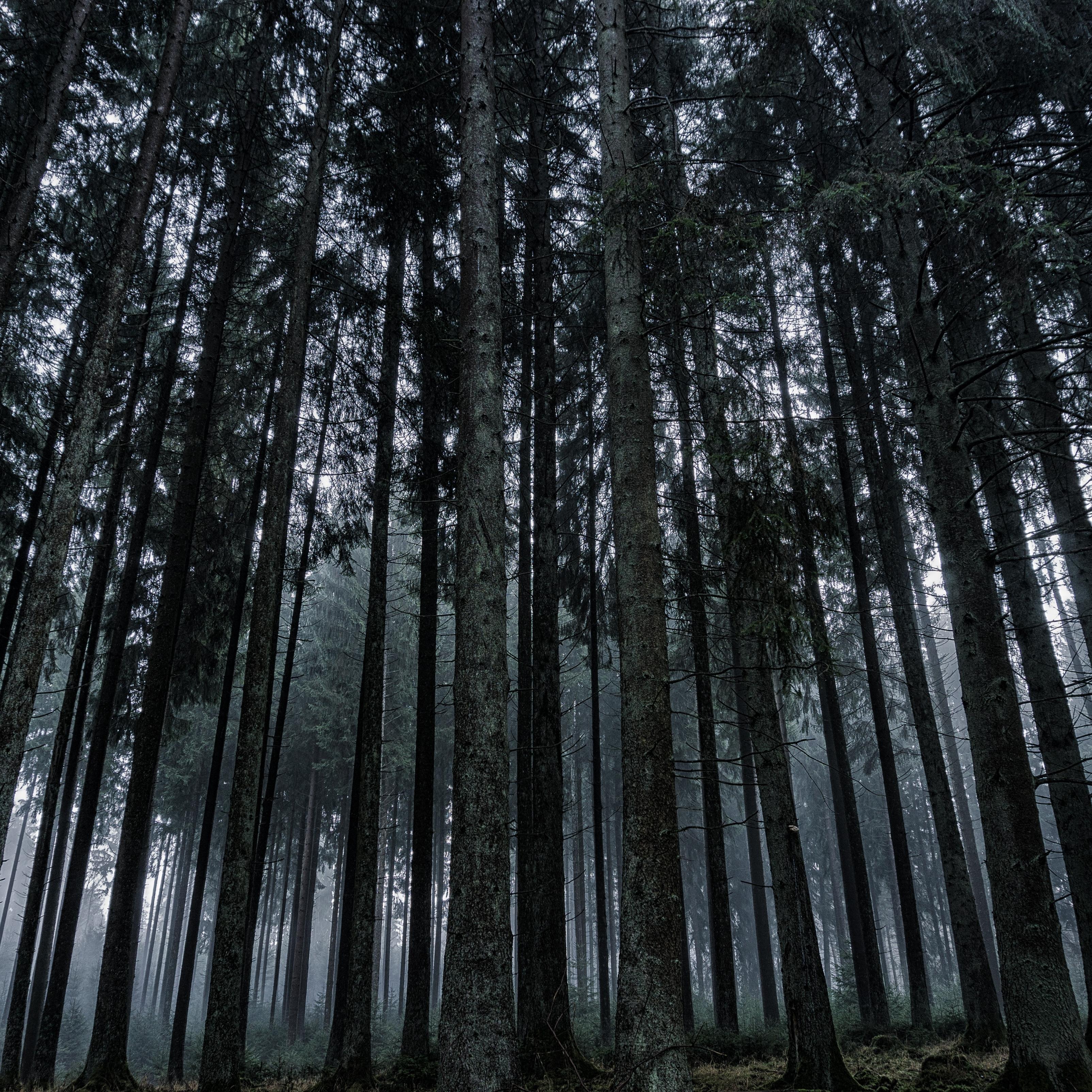 Dark Forrest Trees Nature iPad Wallpaper