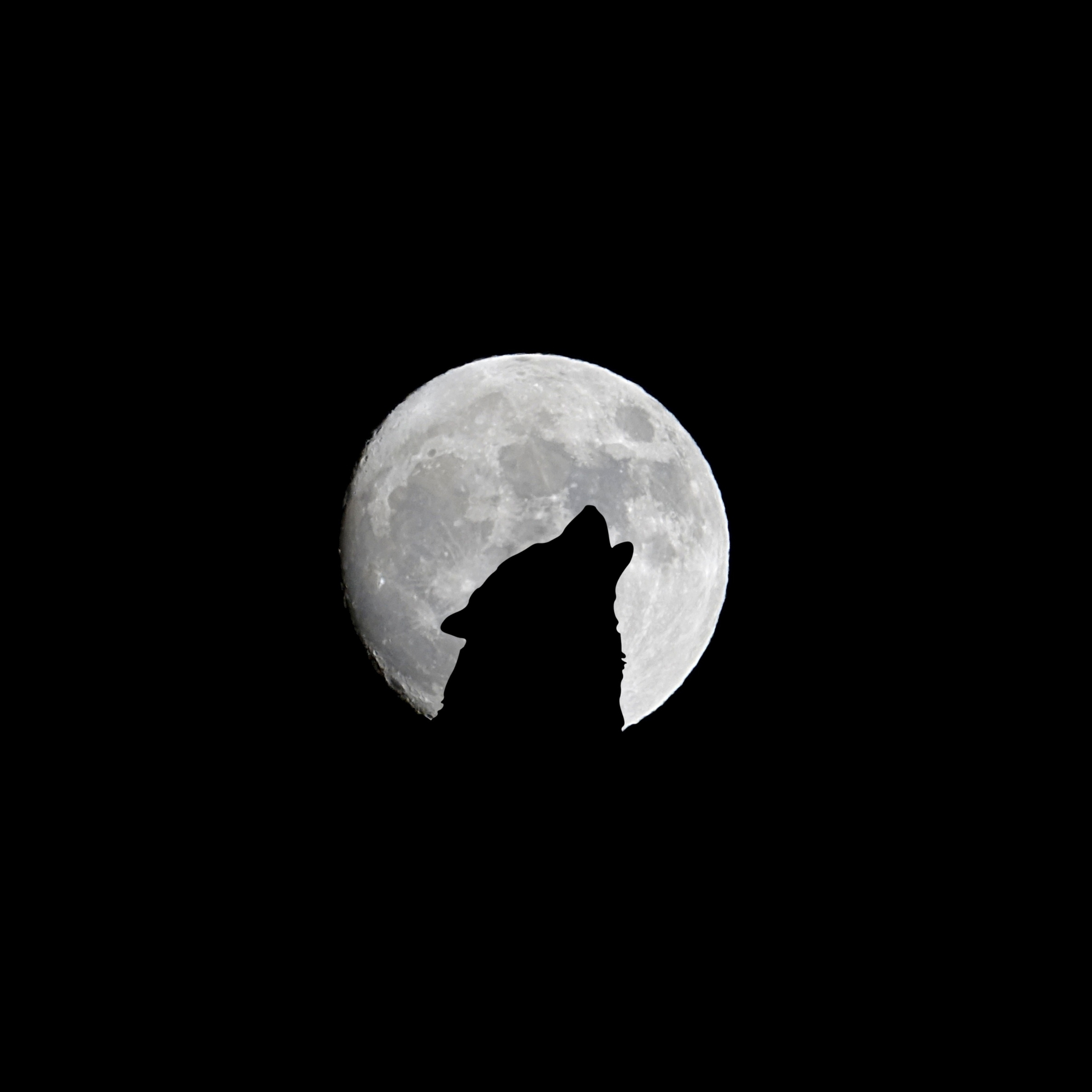 Silhouette of Wolf Full Moon Night Darkness iPad Wallpaper